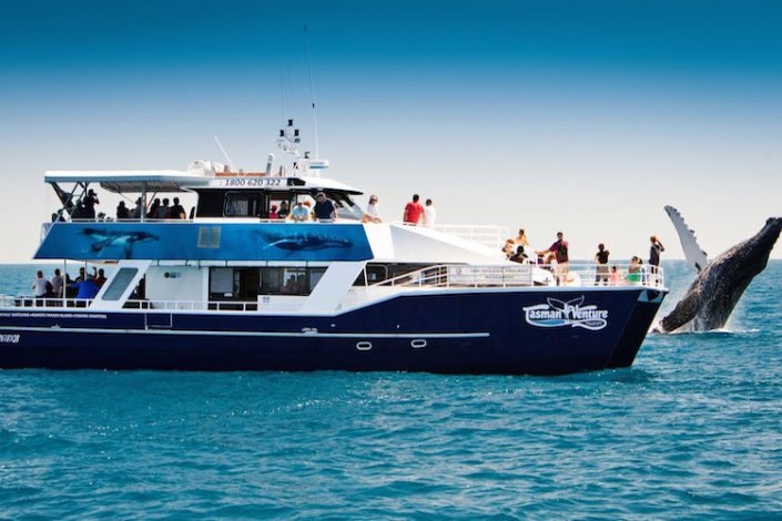 Tasman Adventure whale watching Hervey Bay