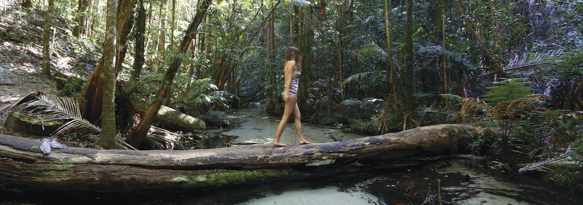 Fraser Island rainforest walk