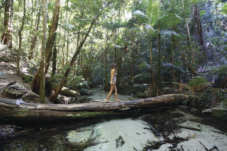 Fraser Island rain forest walk