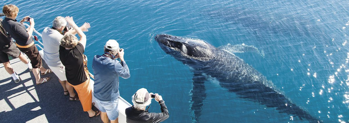 Hervey Bay whale watching up close